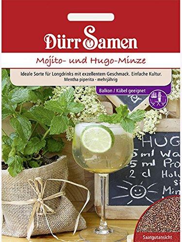 Mojito- und Hugo-Minze Samen