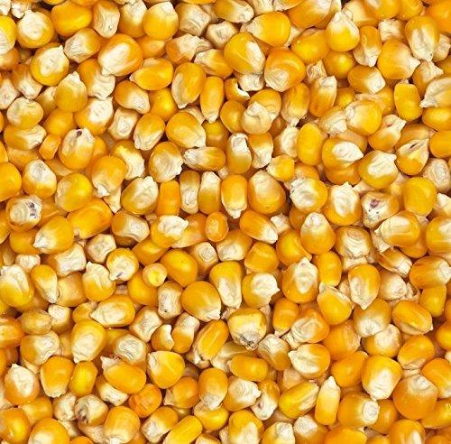 25kg Mais gelb ganz/Cribs - hochwertig und gereinigt