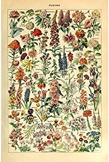 Best free vintage herb prints Reviews