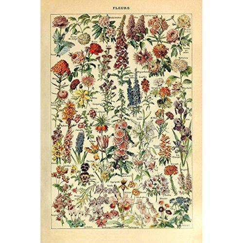 Meishe Art Vintage plakat nadruk kwiat kwiatowe kolekcje botaniczne kwiaty ogrodowe i rośliny identyfikacja tabela referencyjna diagram dekoracja ścienna do domu (30 cm x 40 cm)
