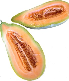 Best cucumber melon plant Reviews