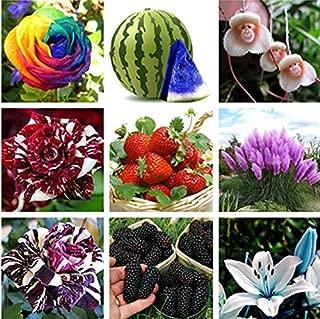 50個入りポークボールローズ種子:30個カラフルな希少なドラゴンローズフラワーシーズガーデン植物種子フラワーシーズ