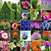 AGROBITS 14 Castagna d'acqua: 5-5000Pc Mixed Homegarden Rare gigante sementi di ortaggi fiori frutta pianta Decor Lot #3