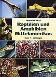 Reptilien und Amphibien Mittelamerikas.