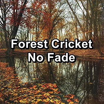 Forest Cricket No Fade