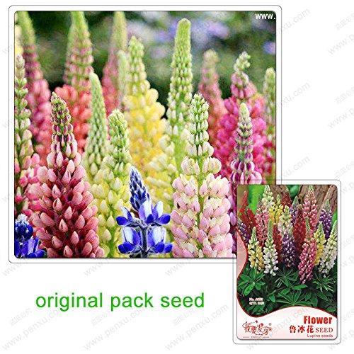 18 graines / Pack, lupin regarder les fleurs, les graines de lupin feuilles, fleurs de lupin plantes rares, bonsaïs balcon en pot