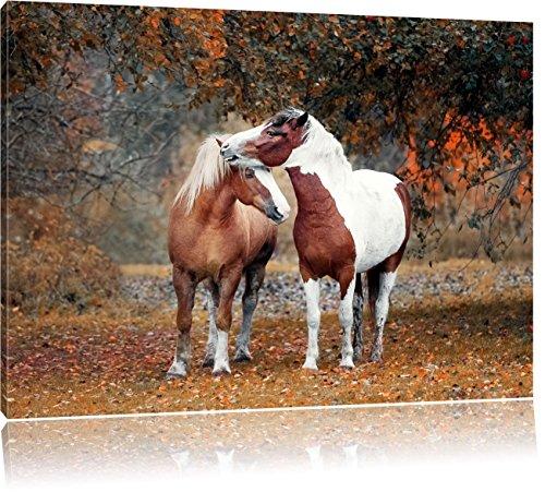 zwei schmusende Pferde, Format: 60x40 auf Leinwand, XXL riesige Bilder fertig gerahmt mit Keilrahmen, Kunstdruck auf Wandbild mit Rahmen, günstiger als Gemälde oder Ölbild,...