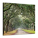"""Hardy Gallery Landscape Artwork Pictures Canvas Prints: Spanish Moss Covered Green Oak Trees on Forest Path in Fall Photographic Image for Wall Arts (24"""" x 18"""", Green)"""