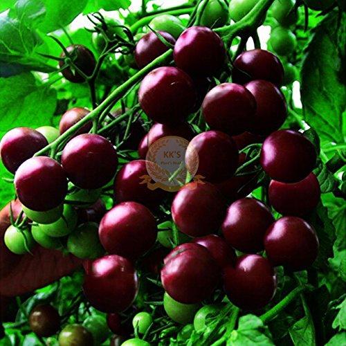 Black Diamond cerise graines de tomates, Paquet en vrac, 100 graines / paquet, Rare Fruits Heirloom KK008
