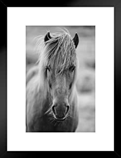 Portrait of Icelandic Pony Horse in Black and White Photo Art Print Matted Framed Wall Art 20x26 inch