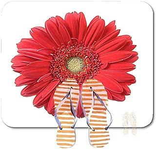 velvet daisy