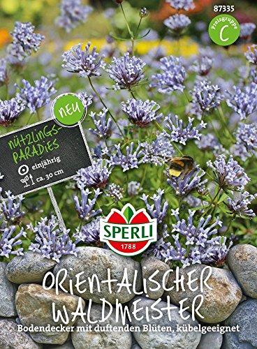 Kräutersamen - Orientalischer Waldmeister von Sperli-Samen