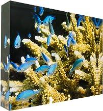 Blue Green Damselfish on Coral Great Barrier Reef Acrylic Block Photo Print Carl Chapman 0942 (30x20x4cm (12x8x1.6in))