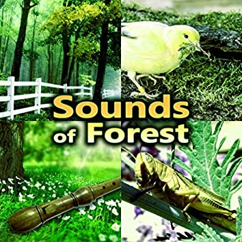 Sounds of Forest – The Very Best Sounds of Birds and Flute Music, Meditation Relaxation, Peaceful Songs for Serenity, Harmony of Senses
