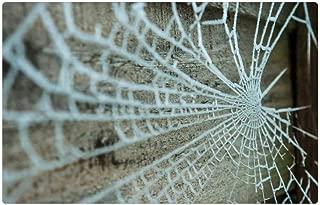 Tree26 Indoor Floor Rug/Mat (23.6 x 15.7 Inch) - Web Nature Spider Pattern Trap Spiderweb Outdoors