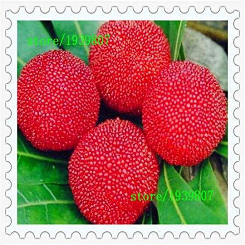 famille bayberry jardin en pot les graines de framboise de graines de vente chaude planté des arbres fruitiers 10 / paquet