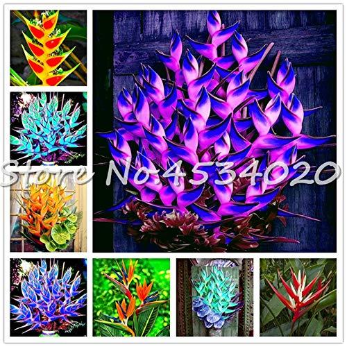 SANHOC Große Förderung! 100 Stück Heliconia Pflanze Bonsai, Staudenblumenpflanzen, Semillas de Plantas Raras, Natur Wachstum für Hausgarten: Mixed