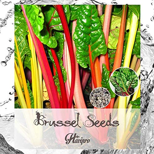 ALEXI Swiss Chard Seeds Rainbow Chard Seeds for Planting Home Garden Outdoors Non GMO High Germination product image