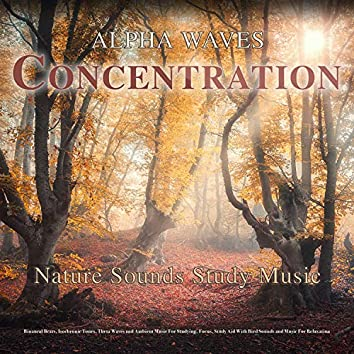 Alpha Waves Concentration - Nature Sounds Study Music - Binaural Beats, Isochronic Tones, Theta Waves and Ambient Music For Studying, Focus, Study Aid With Bird Sounds and Music For Relaxation