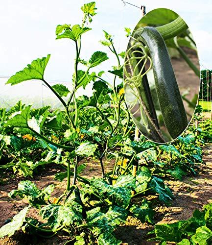 Inkeme Giardino - 10 Pezzi Arrampicata Semi di Zucca Semi di Ortaggi Biologici Seme di Zucchine Arbusto Pianta Hardy Perenne per Giardino Balcone/Patio