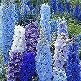 Maceta para Plantas de jardín/Interiores,Semillas de Flores Balcones,Semillas de Flores, la Vida es fácil de vivir-500 Granos