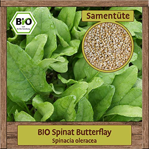 BIO Spinat Samen BUTTERFLY Blattspinat Salat Saatgut Gemüsesamen
