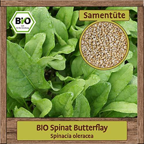 BIO Spinat Samen Butterflay Blattspinat (Spinaca oleracea) Salat Gemüsesamen