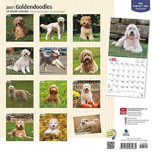 Goldendoodles - 2017 Calendar 12 x 12in