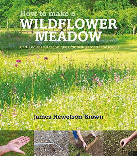 How to Make a Wildflower Meadow: Tried-and-Tested Techniques for New Garden Landscapes