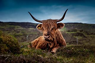 Thouet Home Decor 5d Diamond Painting Scotland Highland Cow Meadow Art Print Diy Diamond Painting