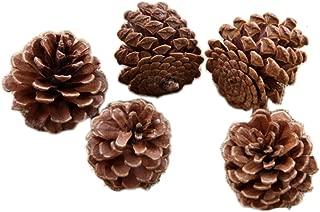 【ANION】天然 松かさ 松ぼっくり クリスマス ツリー リース 飾り 50個セット