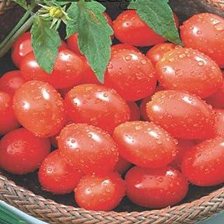 Semente de Tomate Cereja Vermelho - Embalagem 400mg