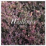 Spring EP [Explicit]