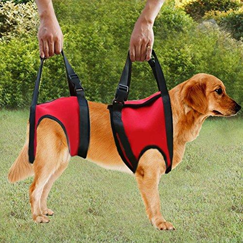 Filfeel Soporte para perros Arnés Pet Walking Ayuda Lifting ...