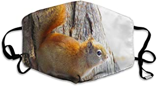 Squirrel Animal Rodent Tree Face Mask - Comfortable, Re-Usable Anti Dust Mask - Filters Dust, Pollen, Allergens, Flu Germs - Allergy Mask - Ideal for Dog Grooming, Gardening, Sanding