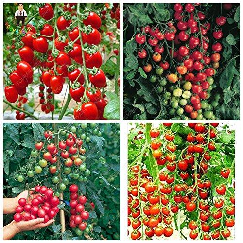 200pcs Tomates cerises graines Fruits comestibles Balcon Graines de légumes très doux pour la maison Bonsai pot Gerden Plantation