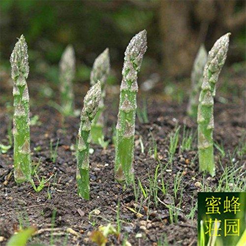 semences vivaces asperges quatre saisons diffusées 20 graines