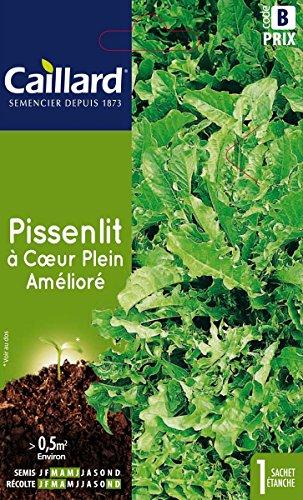 Caillard PFCC14701 Graines de Pissenlit à Coeur Plein Améliore