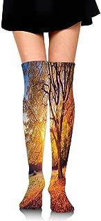 Compression Socks,Big Majestic Autumn Tree Shedding Faded Leaves on Hill Slop Season Landscape,Knee High Compression Sock Women Men,Best Running,Athletic Sports,Crossfit,Flight Travel(25.5