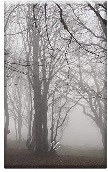 Single Gang Blank Wall Plate Cover Beech Wood Fog Forest Trees Tree Trunks Book 5 Amazon Com