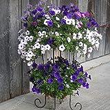 100 piezas colgantes Semillas Semillas Petunia balcón en maceta de flores Petunia que se arrastra semillas de la petunia raras Bonsai Flor Morning Glory Semillas de color caqui oscuro