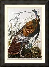 Best john james audubon wild turkey male Reviews