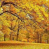 CHTING 100 Piezas Semillas De árboles De Arce Amarillo Se Pueden Plantar Individualmente O En Piezas Para Decorar El Jardín Mejorar El Medio Ambiente Y Crear Un Ambiente Elegante Y único