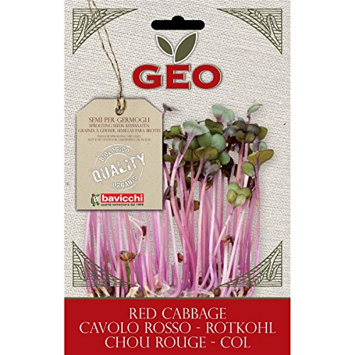 Geo Graine à Germer Chou Rouge Brun 12,7 x 0,7 x 20 cm