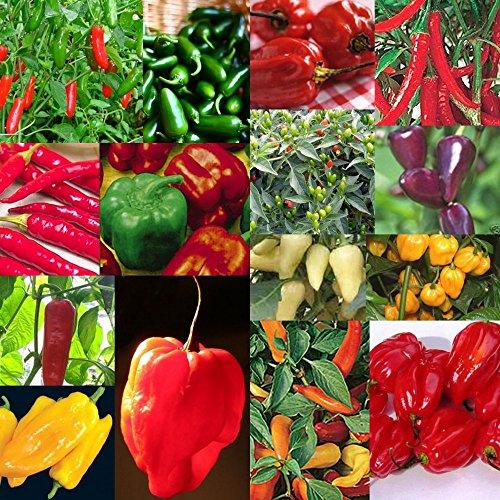 100seeds mixtes / sac Chilli Pepper pots Graines de fleurs Planters graines de légumes