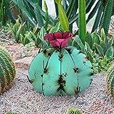 Debouor Mini Metal Saguaro Cactus Ornament, DIY Mexican Cactus Torch Sculpture, Decorative Desert Plants Statue&Figurine, Indoor Modern Home Outdoor Yard Art Lawn Garden Decor (B, Blue)