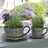 Plant Theatre 2 Willow Teacup Planters – Gift...