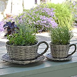 1 Plant Theatre 2 Willow Teacup Planters Gift Boxed