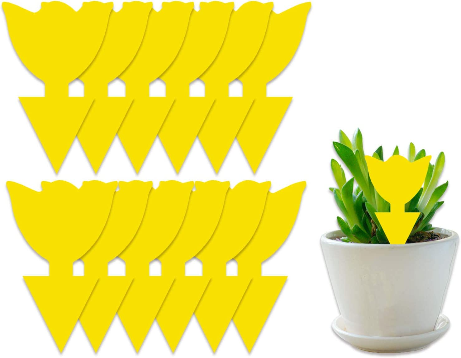 COSYWORLD 12 Pack Sticky Traps for Indoor/Outdoor Use, Gnat Trap for Flying Plant Insect Such as Fungus Gnats, Whiteflies, Aphids, Leafminers - Disposable Glue Fruit Fly Traps