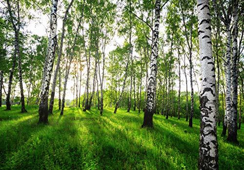 wandmotiv24 Fototapete Birkenwald Wiese Gräser XL 350 x 245 cm - 7 Teile Fototapeten, Wandbild, Motivtapeten, Vlies-Tapeten Birken Wald Dämmerung Wiese M5838